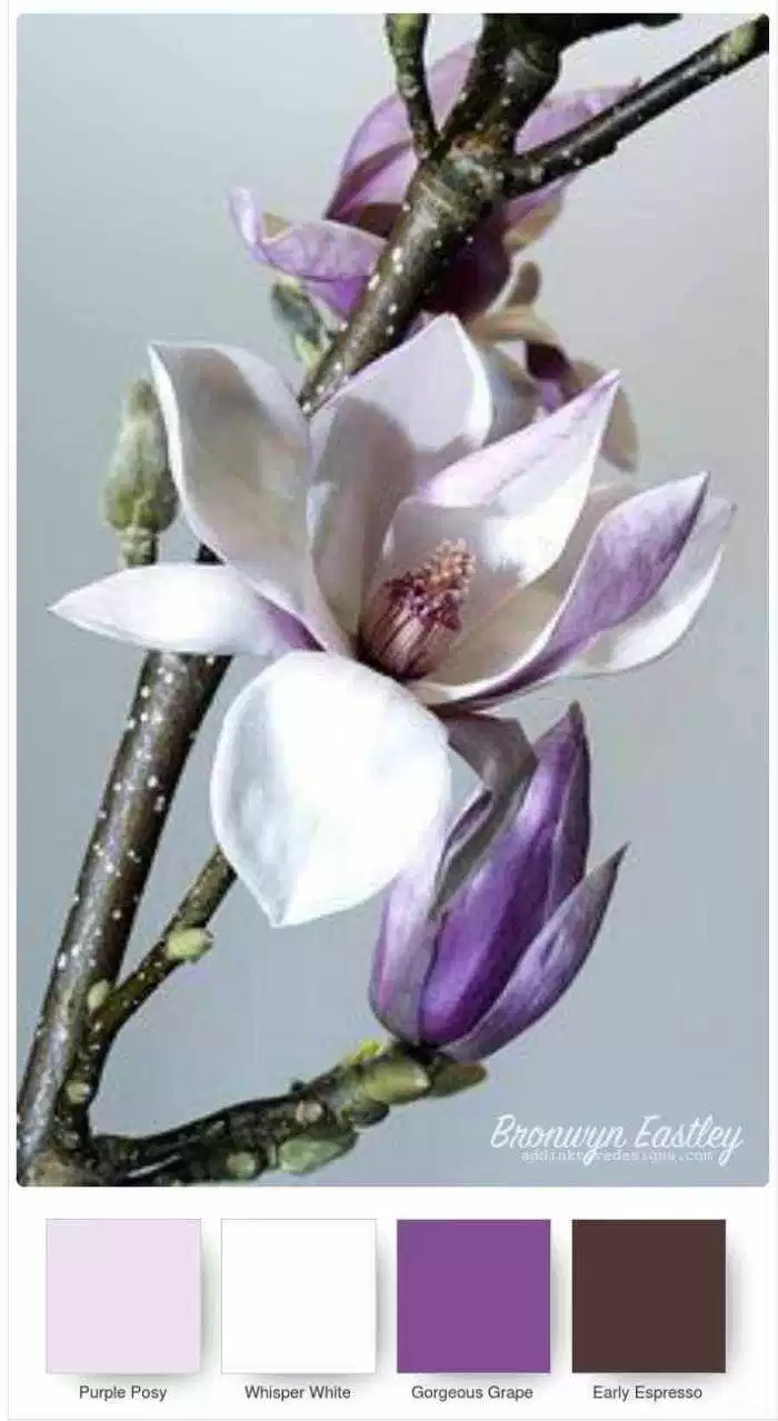 Good Morning Magnolia Stampin Up Colour Combos Magnolia Colors Color Combos Magnolia