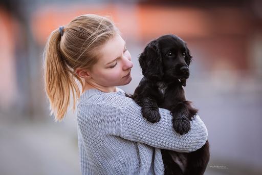 Stadtshooting Mit Welpe In 2020 Hundefotografie Hunde Cocker Spaniel Welpen