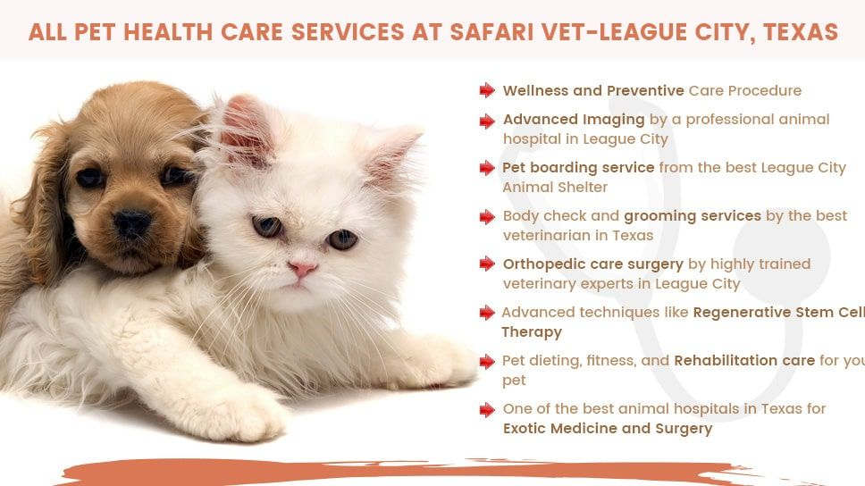All Pet Health Care Services In One Place Safari Veterinary Care Centers Safari Veterinary Care Centers Pet Health Veterinary Care Health Care