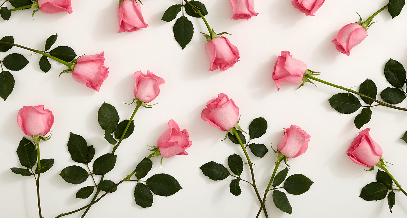 History Meaning Of Pink Roses A Shade By Shade Guide Pink Roses
