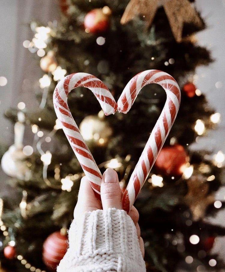 #christmas #winter #candycane #christmastree #winterpictures #christmasdecor #christmaspictures #christmasvibes #christmasideas #aesthetic #christmasaesthetic