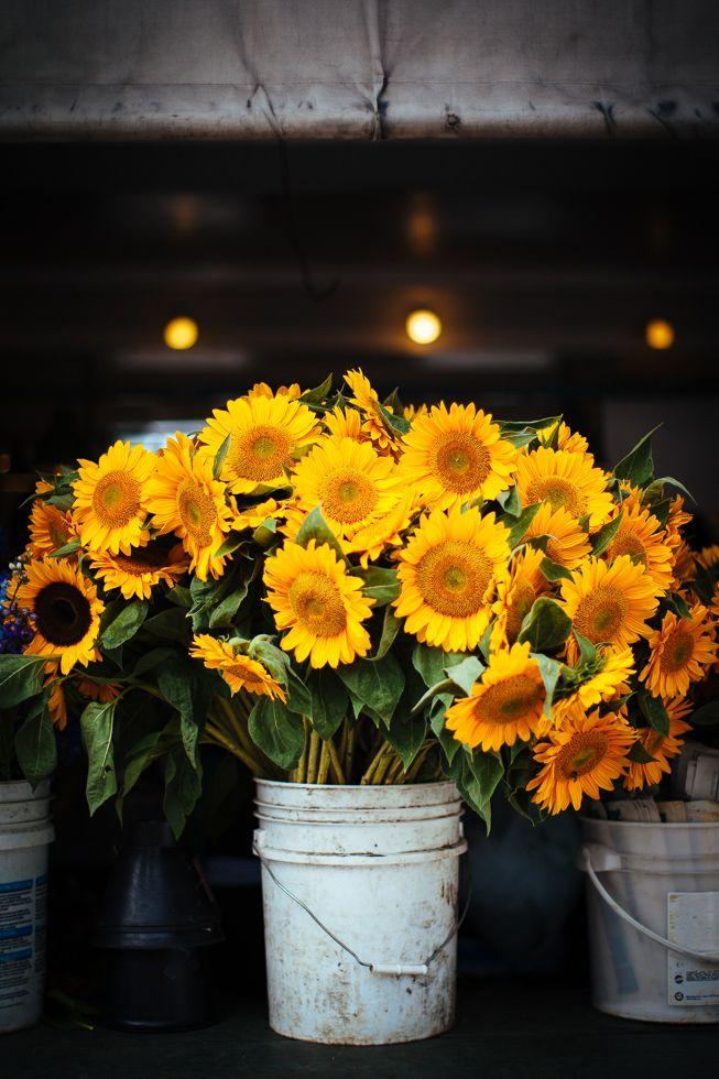 Sunflowers at Pike Place Market August 24 2013 Seattle WA