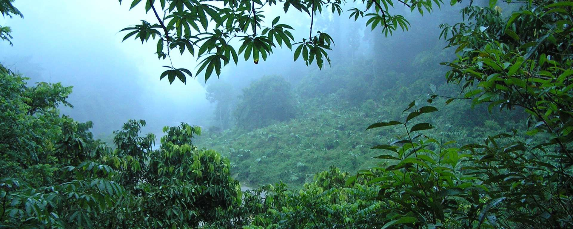 Image result for borneo rainforest