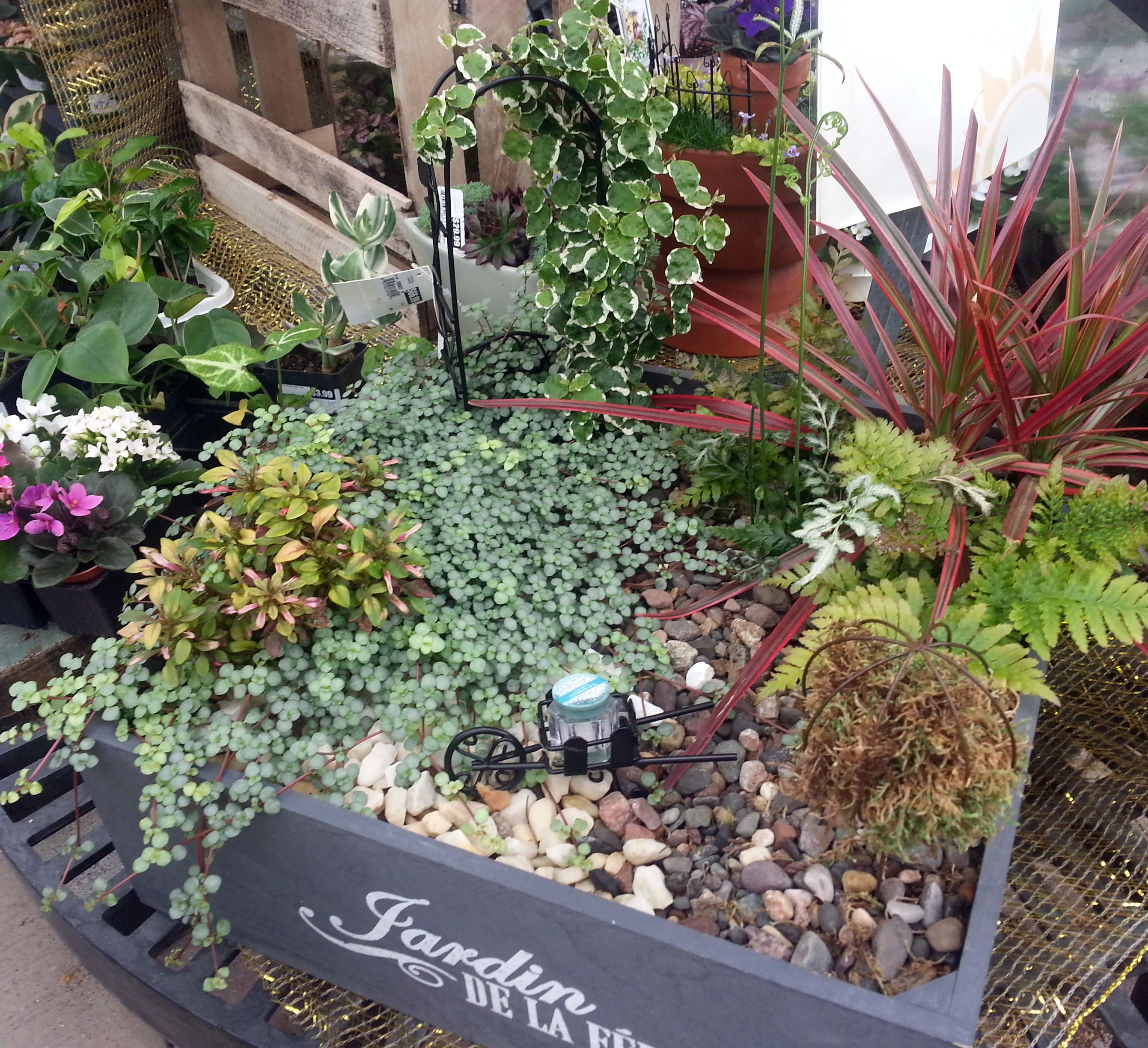 A #Fairy #Garden Designed By Stauffers Of Kissel Hill Garden Centers. Find  A Location Near You To Pick Up Plants, Accessories And Designs: Www.skh.com.
