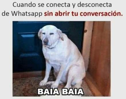 Finest Memes En Espanol Chistosos De Perros 28 Concepts