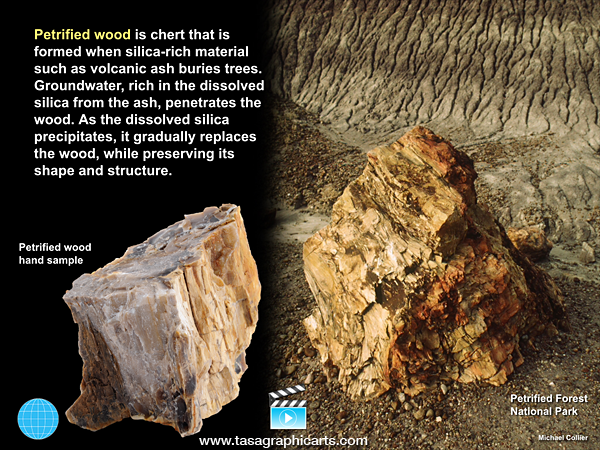 Petrified Wood Is An Excellent Example Of A Chemical Sedimentary