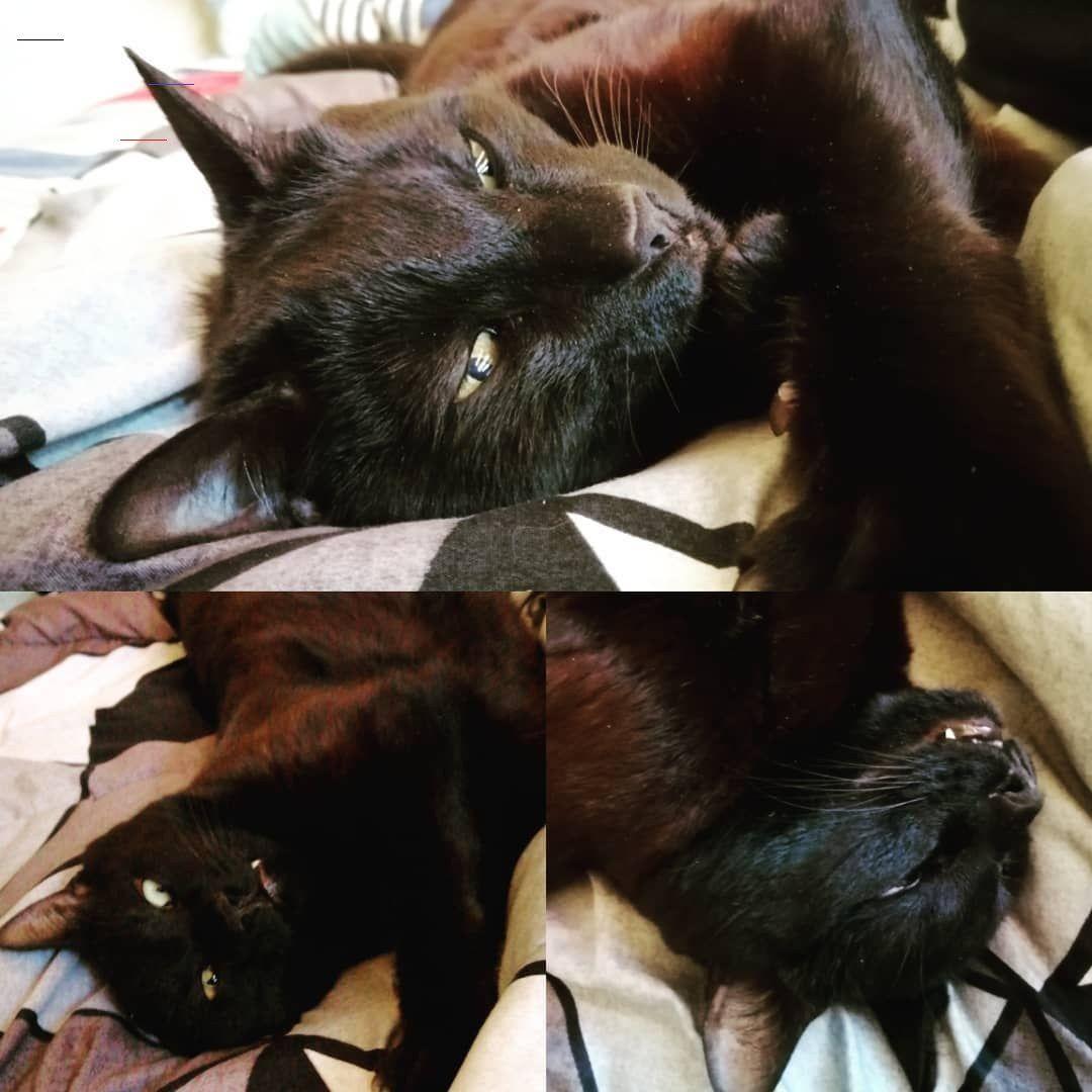 Sleepykitty In 2020 Sleepy Cat Kittens Funny Cat Ages