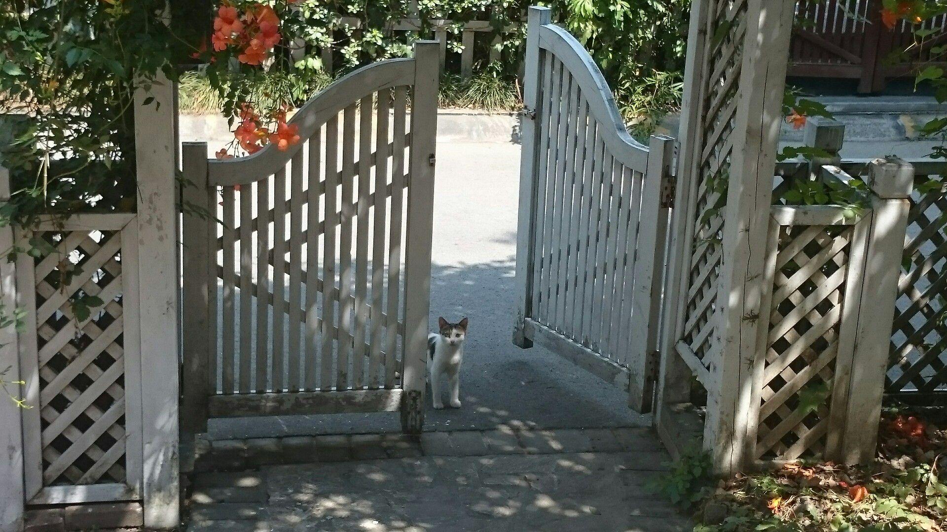 Bin heute morgen rausgegangen, nur um diese kleine Steunerkatze am Tor zu sehen. Love cats ❤