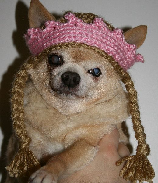 Chihuahua Queen Hat – Pattern | Crochet | Pinterest | Stricken und ...