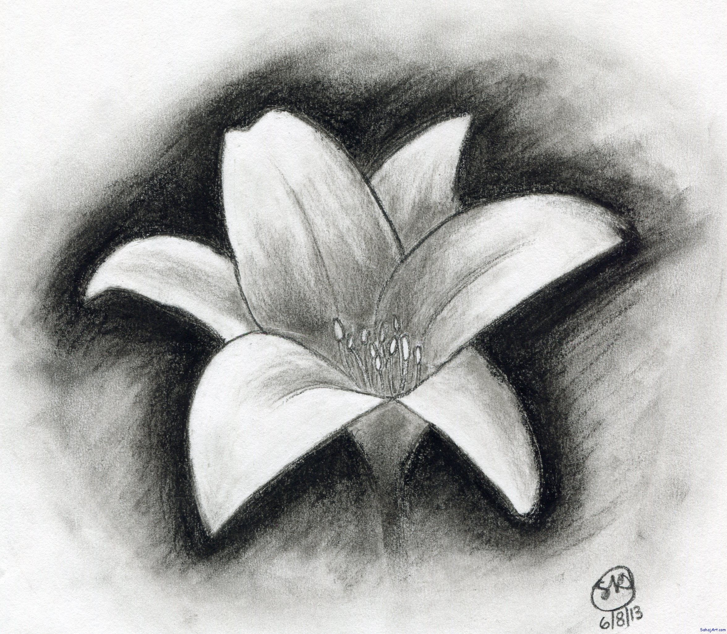 Easy Drawings Of Flowers In Pencil Easy Charcoal D...