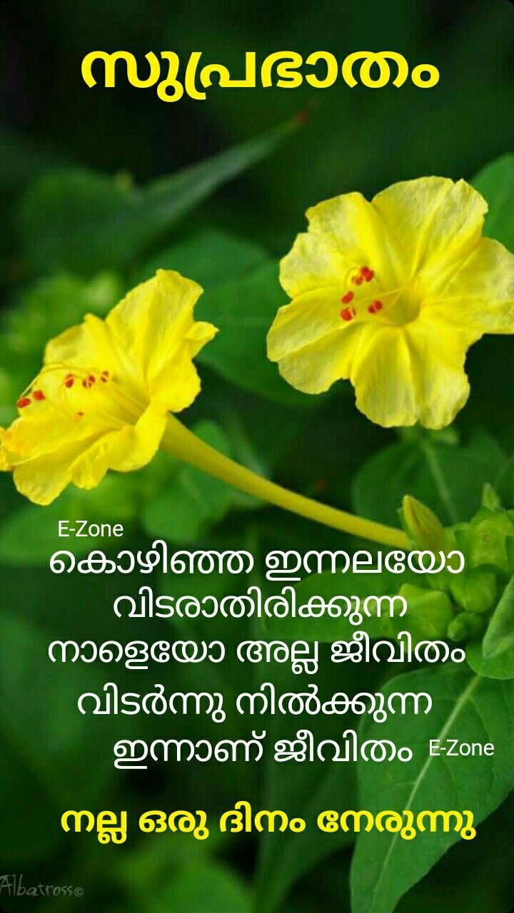 Pin by Eron on Good morning ( Malayalam ) Good morning