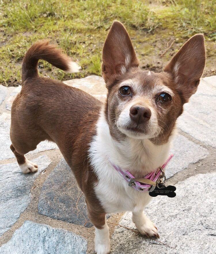 dog info,dog care,dog stuff,dog training doggrooming