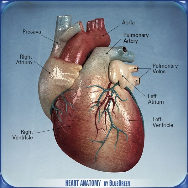 Cardiovascular Exercise is the best way to burn calories, but what ...
