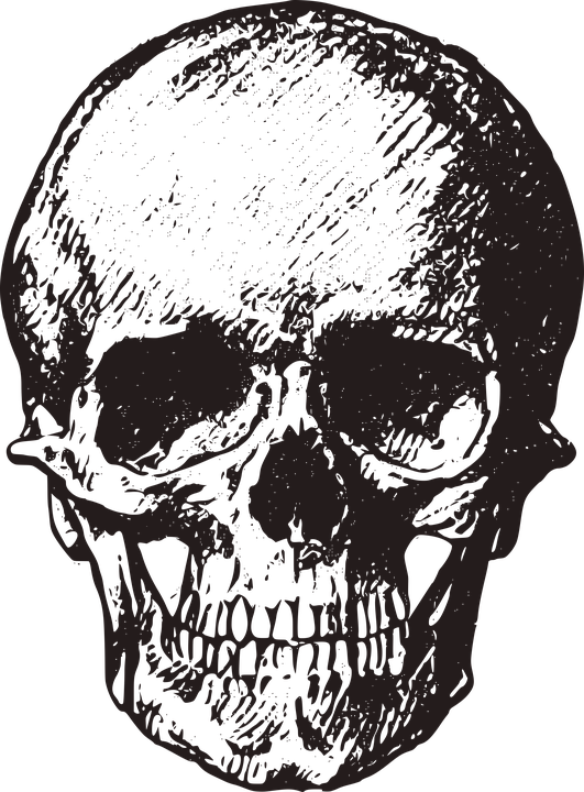 Free Image on Pixabay - Skull, Vintage, Old, Horror in 2018 | ink ...