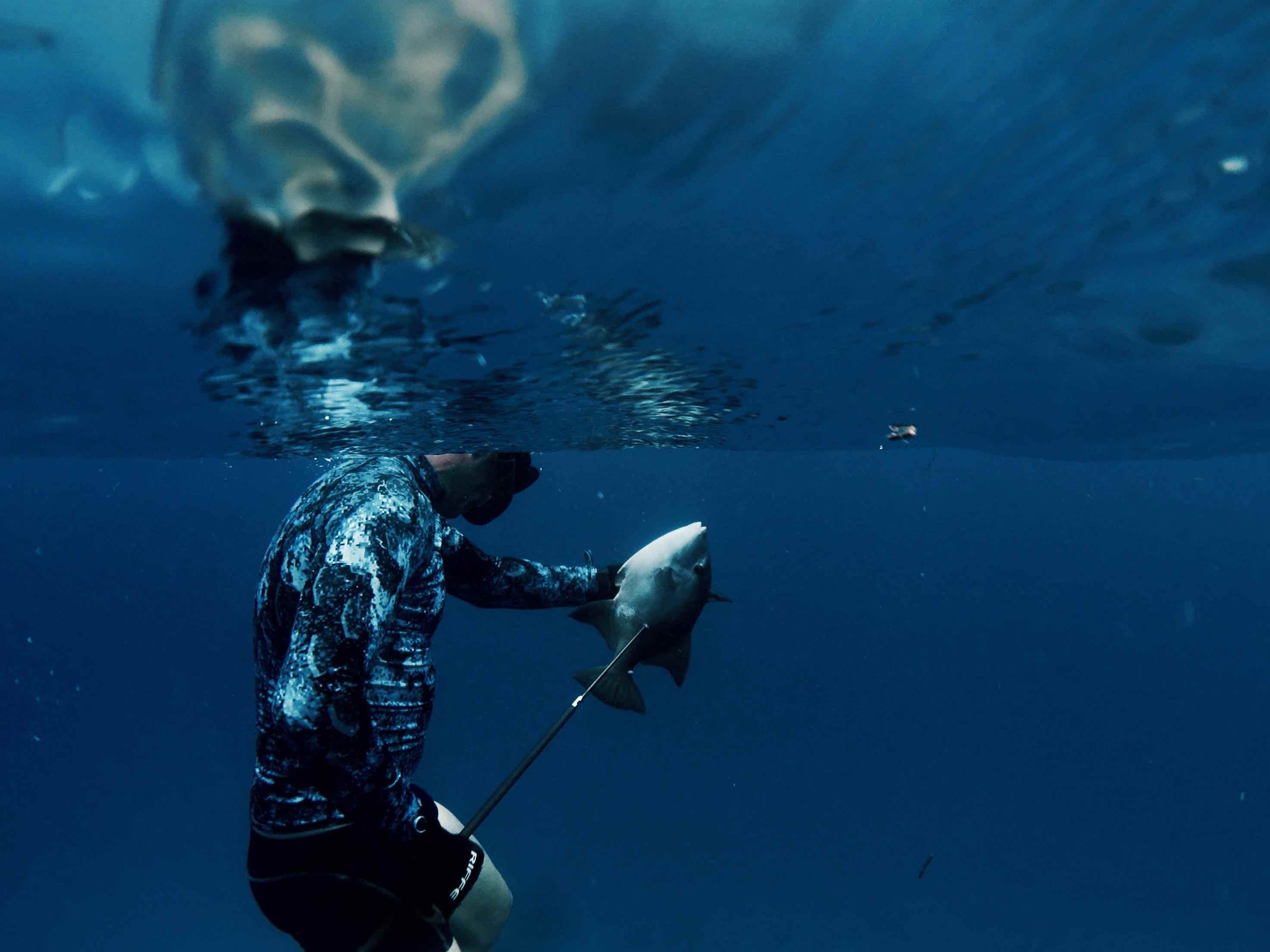 Homepage   Spearfishing   Best scuba diving, Scuba diving