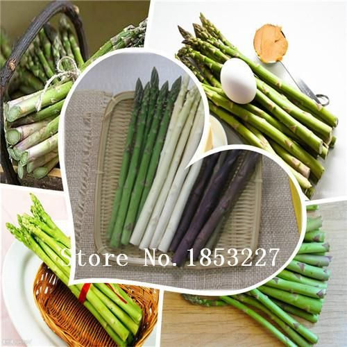 visit to buy salefree shipping 100 mary washington asparagus seeds