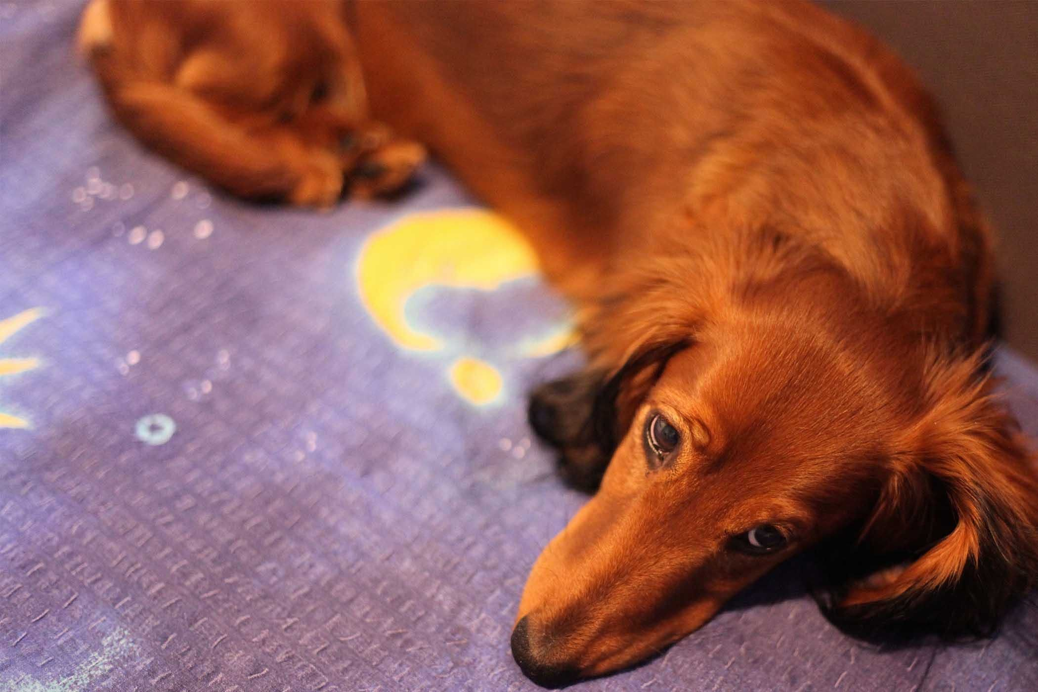 How To Train Your Dog To Not Pee At Night Blaze Dog Pee Dogs