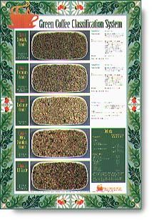 Where Does Your Favorite Roasted Coffee Fit Into The Categorization Green Coffee Green Coffee Bean Coffee Roasting