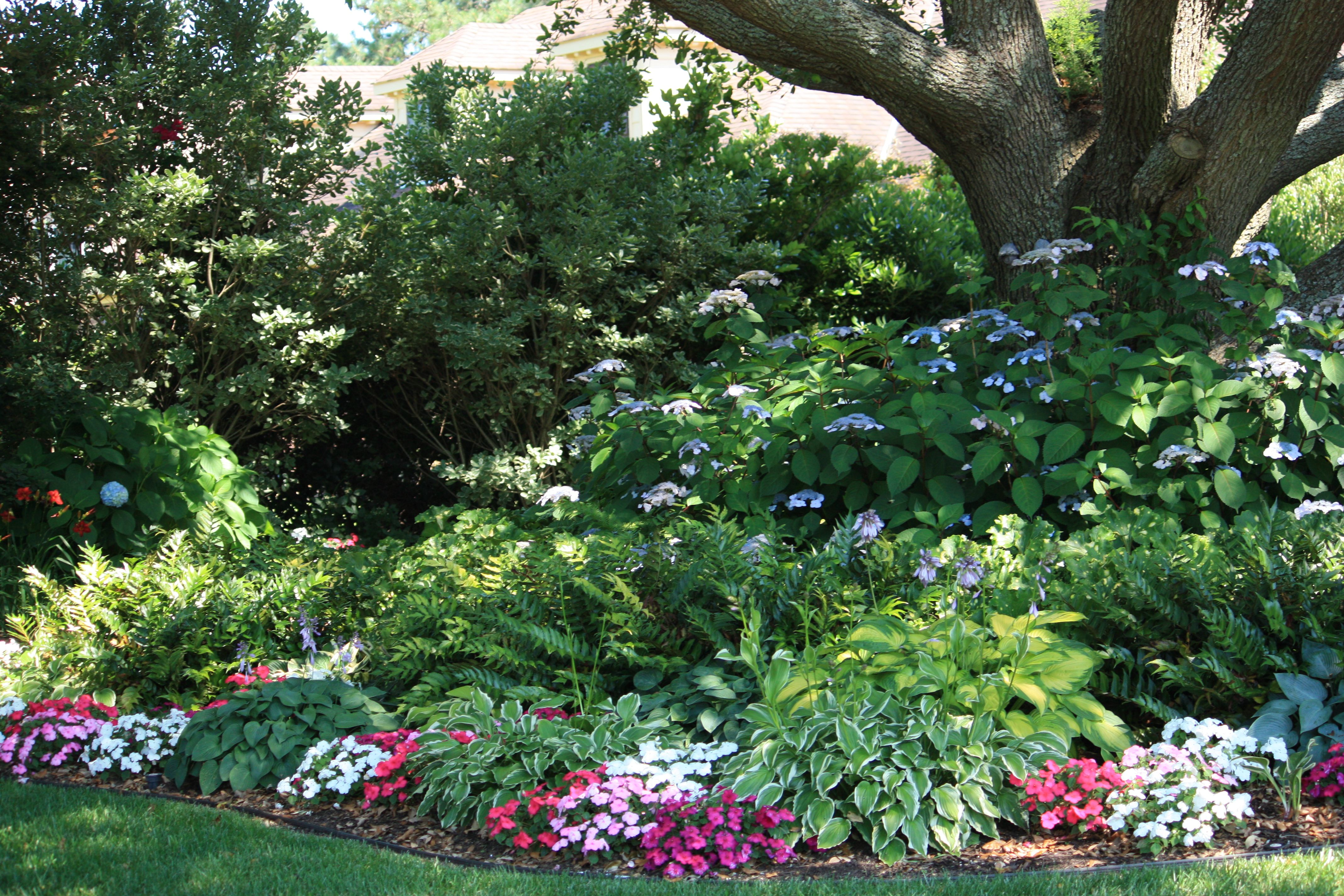 Lovely Shade Garden Hydrangeas Hostas Impatiens Bluebells Tall And Sparse Grasslike Plant And Some Oth Flower Garden Pictures Garden Pictures Shade Garden