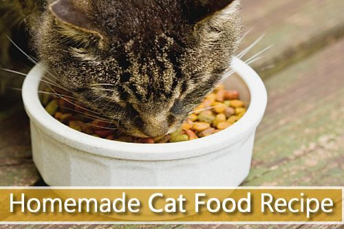 Homemade cat food recipe easily make your own healthy cat food at homemade cat food recipe easily make your own healthy cat food at home in just forumfinder Image collections