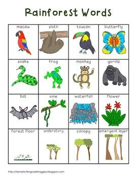 Rainforest Words Rainforest Preschool Rainforest Crafts