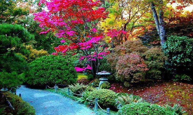 arbustos pequeños para jardin - Buscar con Google Paisajismo