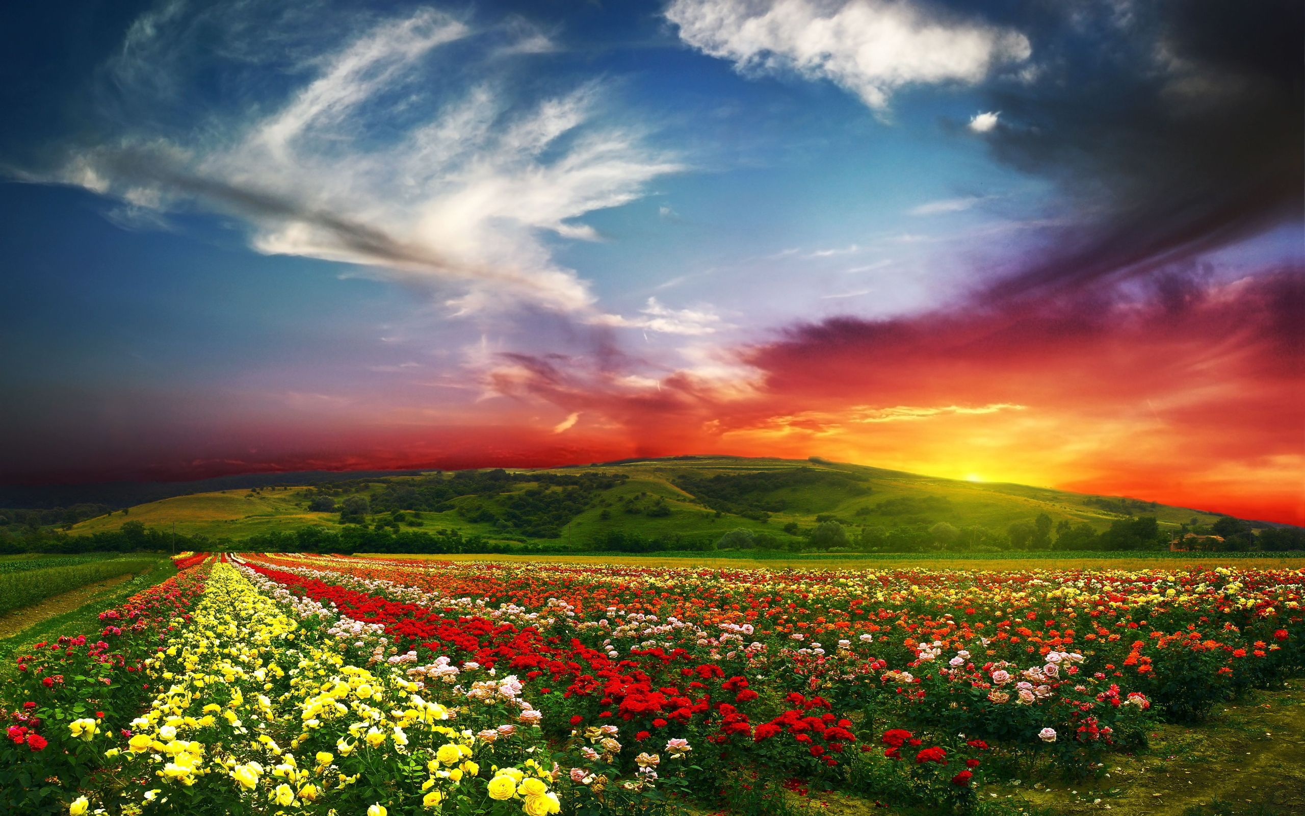 Flower landscape with sunset hd wallpaper ideas for the for Beautiful flower landscapes