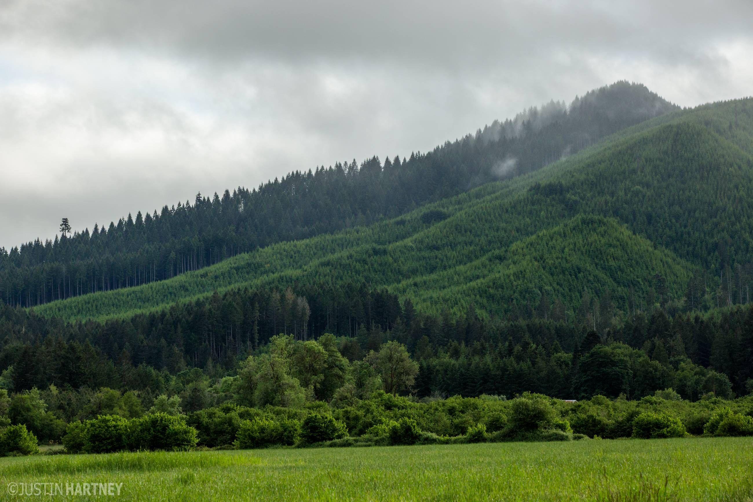 50 Shades of Green - Oregon [OC] p2600x1733]