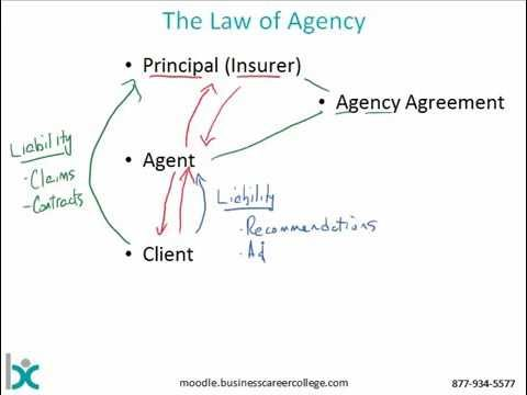 Insurance Management System Agency Law Insurance Auto Auction