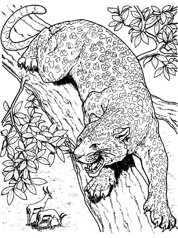 Cute Cheetah Coloring Pages Below Is A Collection Of Cheetah Coloring Page Which You Can Download For F Cat Coloring Page Animal Coloring Pages Coloring Pages