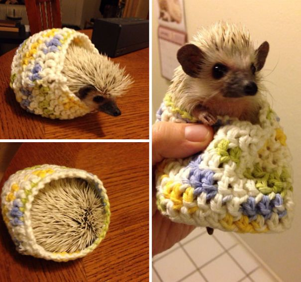Hedgehogs In Sweaters