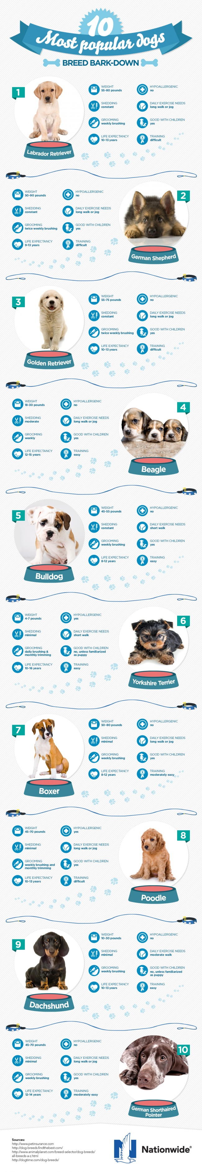 Dog Breed Bark-down: The 10 Most Popular Dogs