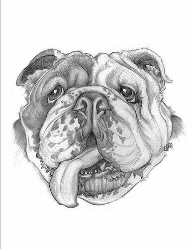 Pin By Eric West On Printables Bulldog Drawing Bulldog Images