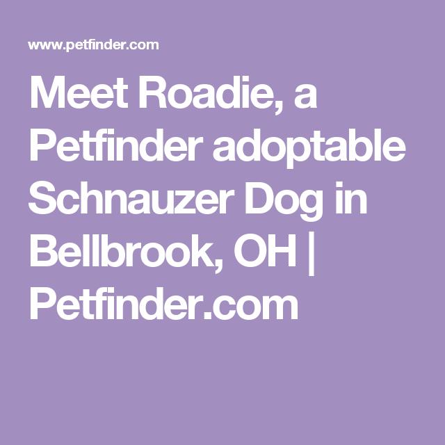 Adopt Roadie on Rat terrier dogs, Adoptable dachshund