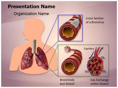 Human lung function powerpoint presentation template is one of the human lung function powerpoint presentation template is one of the best medical powerpoint templates by editabletemplates toneelgroepblik Image collections
