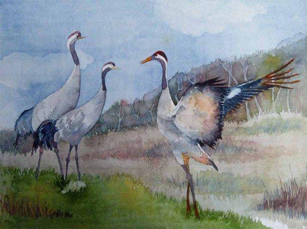 Hochzeitstanz Der Kraniche C Aquarell Von Frank Koebsch 48 0 X 36 0 Cm 360 Mehr Informationen Unter H Watercolor Animals Wildlife Art Beautiful Paintings