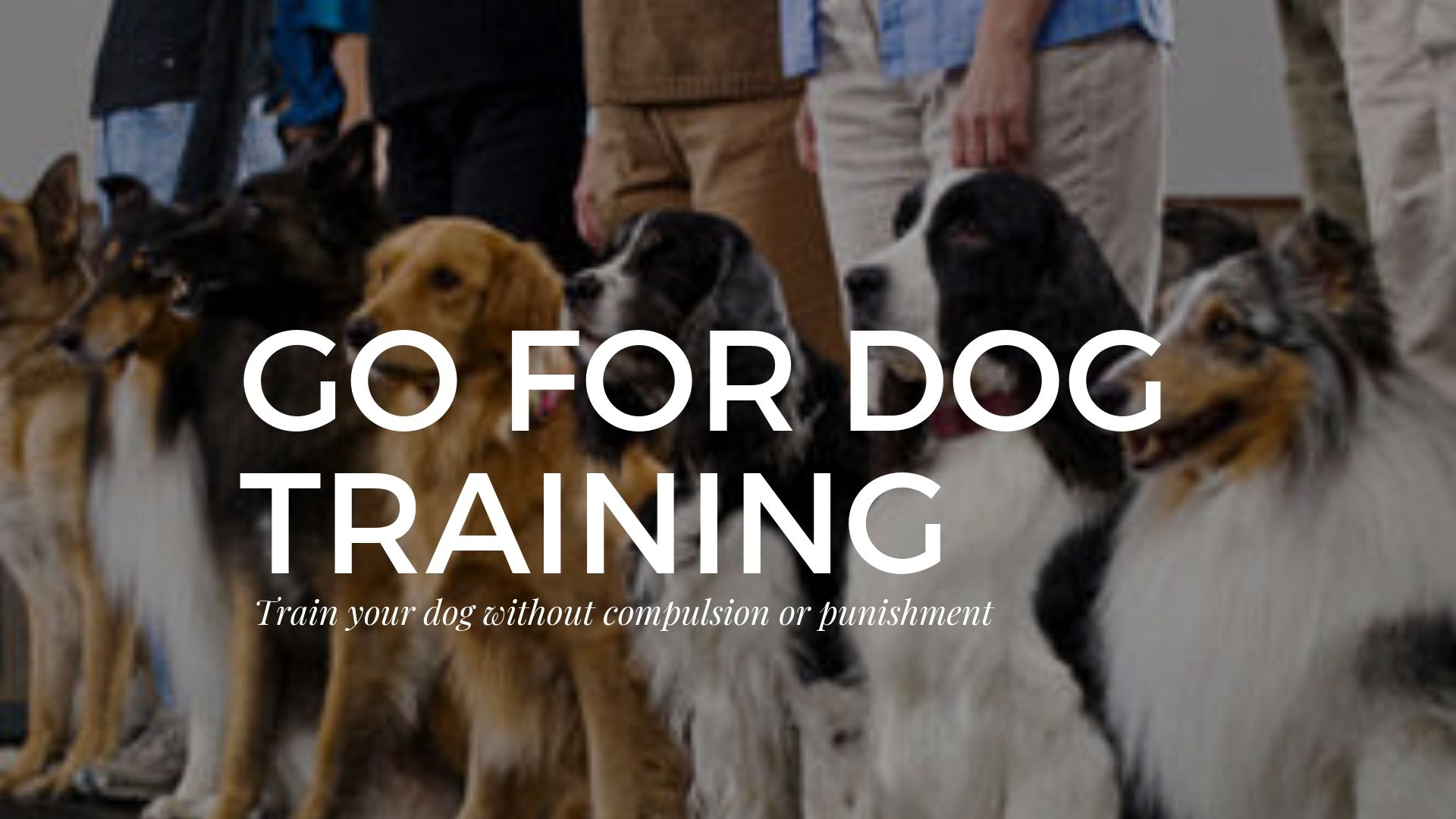 Sometimes It Can Be Difficult To Find A Good Dog Trainer That Is