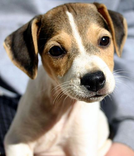 Inquisitive Cute Puppy Pictures Cute Puppies Puppy Pictures