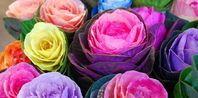 The history of mexican tissue flowers ehow ecc mexico the history of mexican tissue flowers ehow mightylinksfo