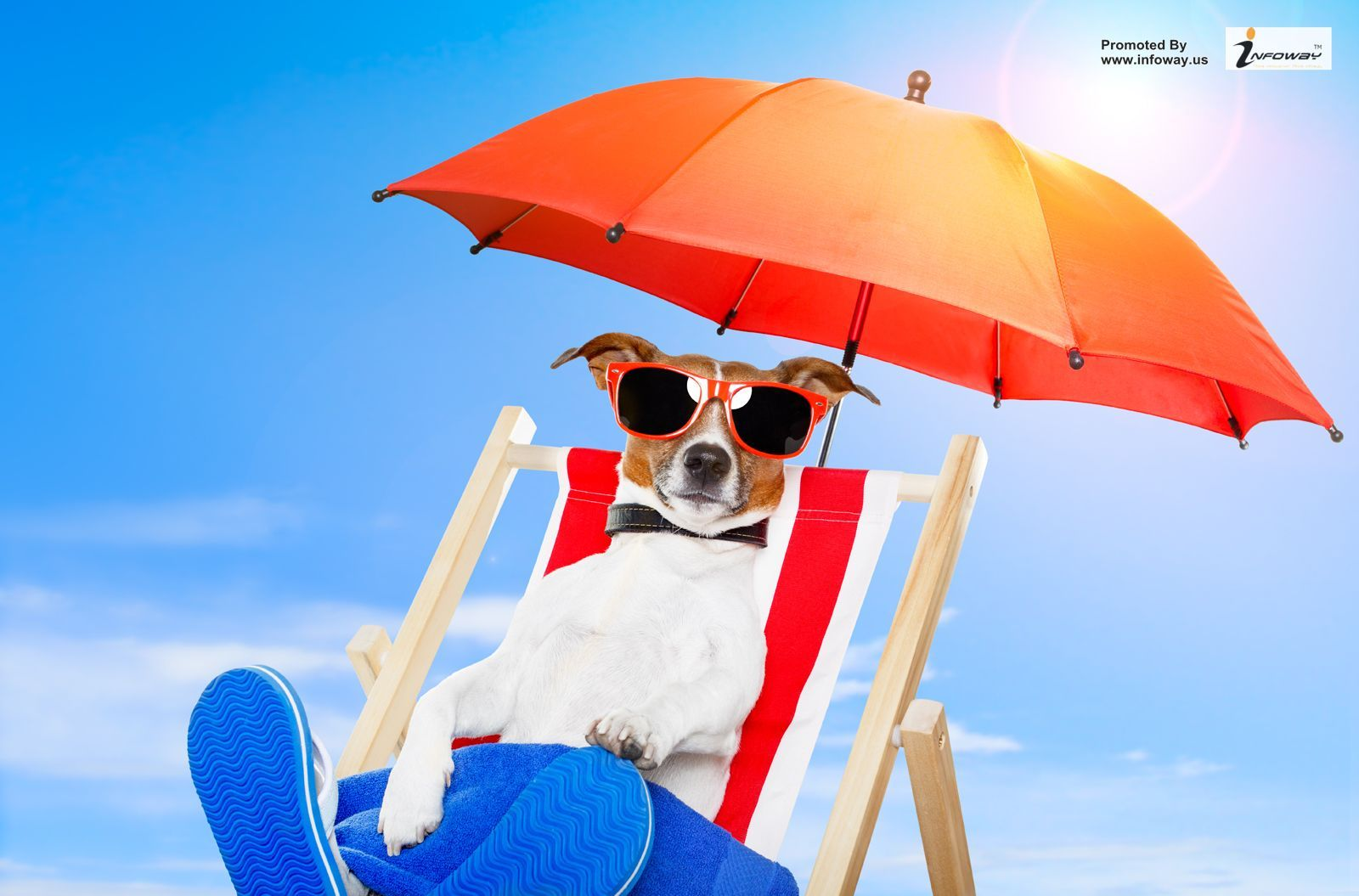 Funny summer picture.....For any query email: sales@infoway.us ...