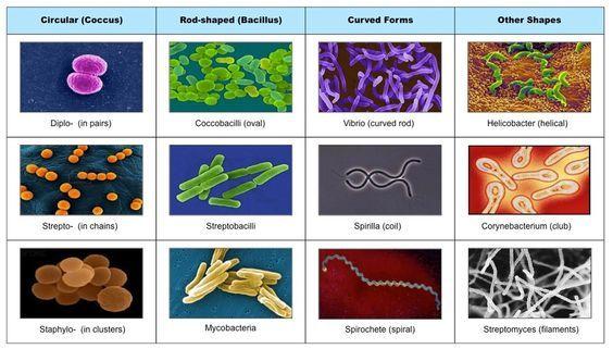 bd010255511a22a12921e5f894644713.jpg (564×321) | AP Biology ...
