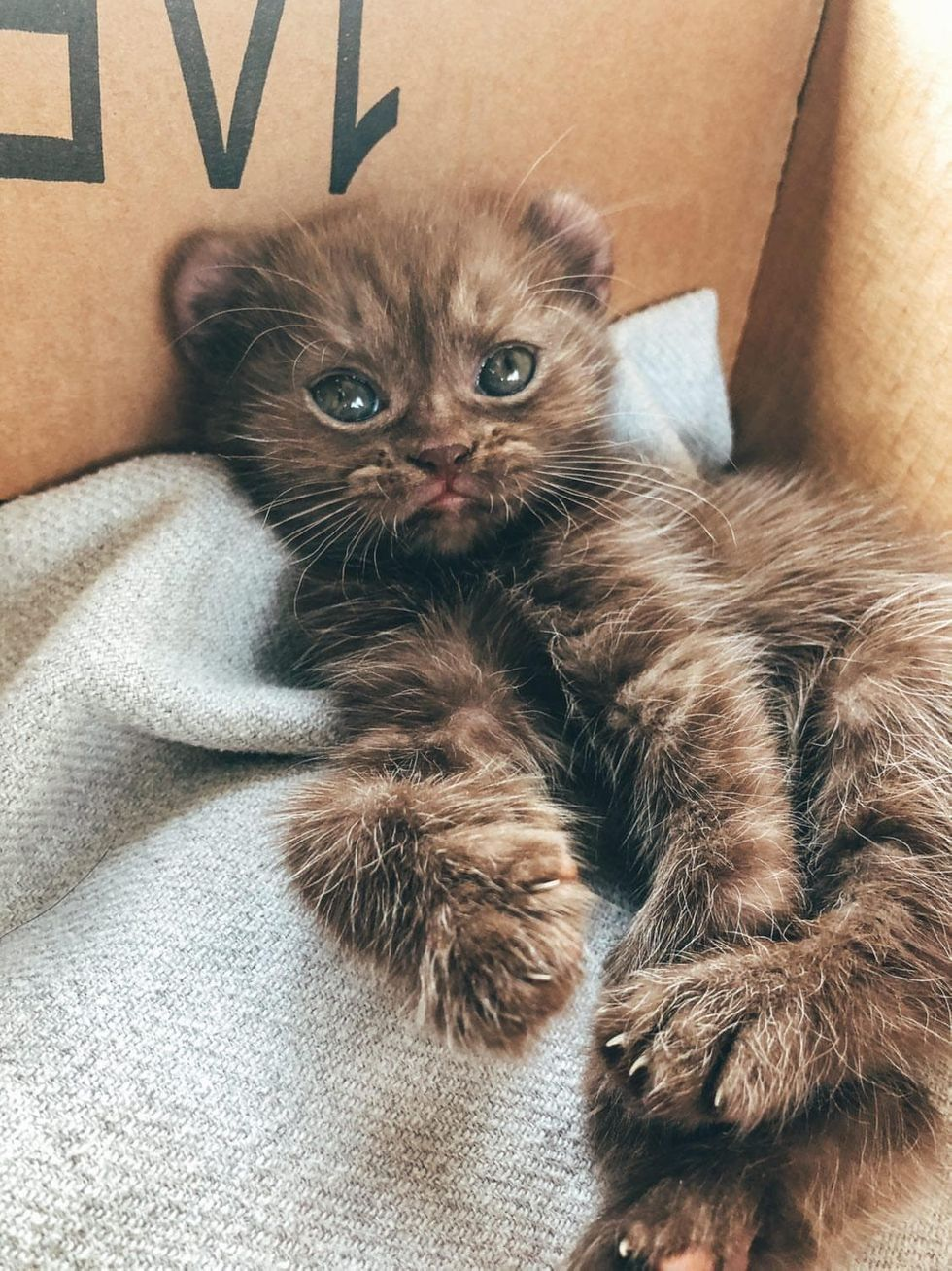 Kitten With Bear Ears And Twisted Legs Cuddles Family That Is Kind To Her Love Meow In 2020 Bear Ears Kitten Kittens Cutest