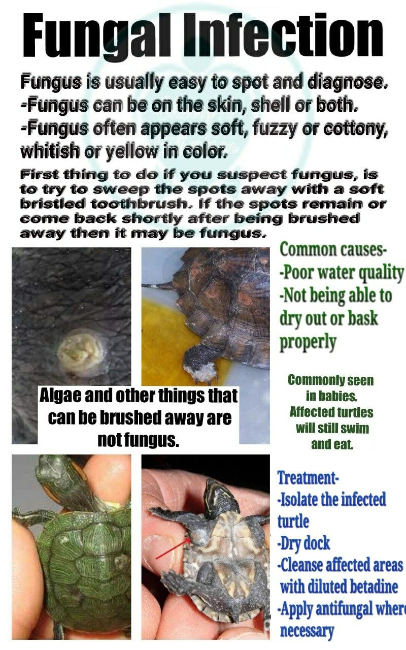 Fungal infection- signs and symptoms in turtles/tortoises