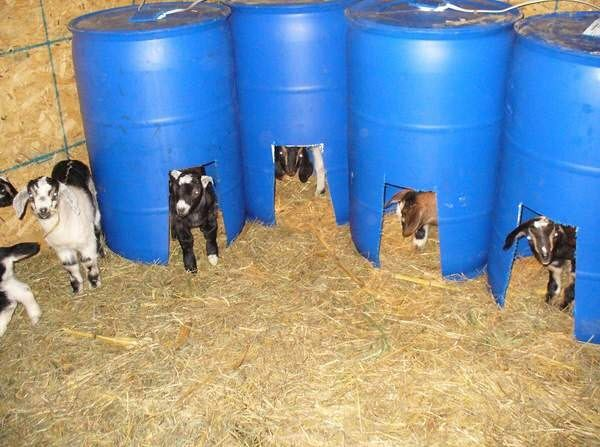 Diy Barrel Goat Kid Bed Petdiys Com Goats Zwergziegen Kleintiergehege Ziegenhaltung