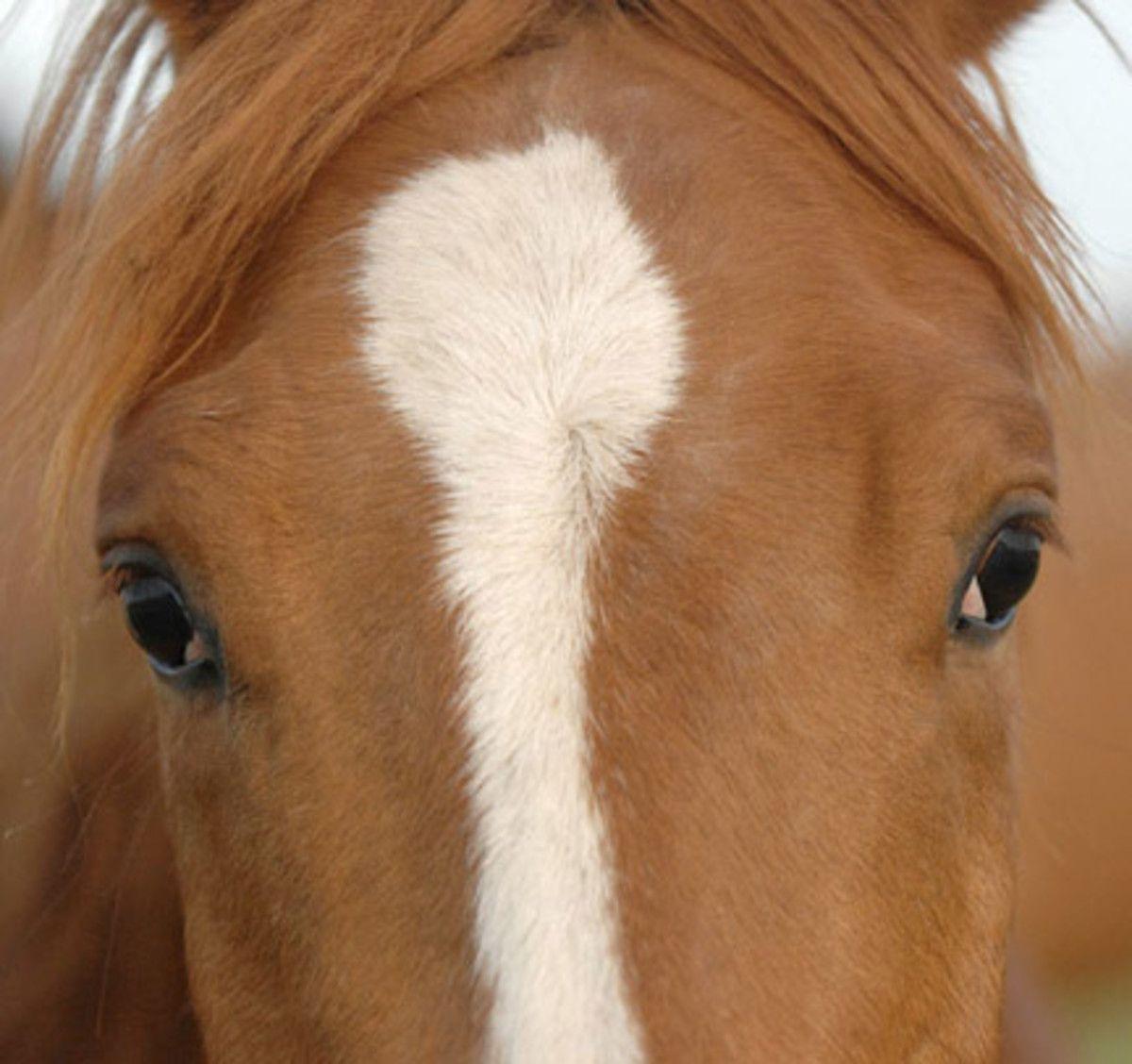 Horse Hair Whorl Patterns Horse And Animal