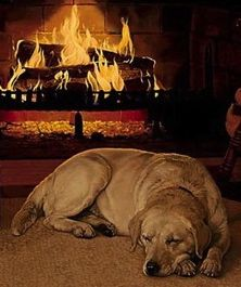 animals laying by a cozy fireplace | Anyone who owns and loves ...