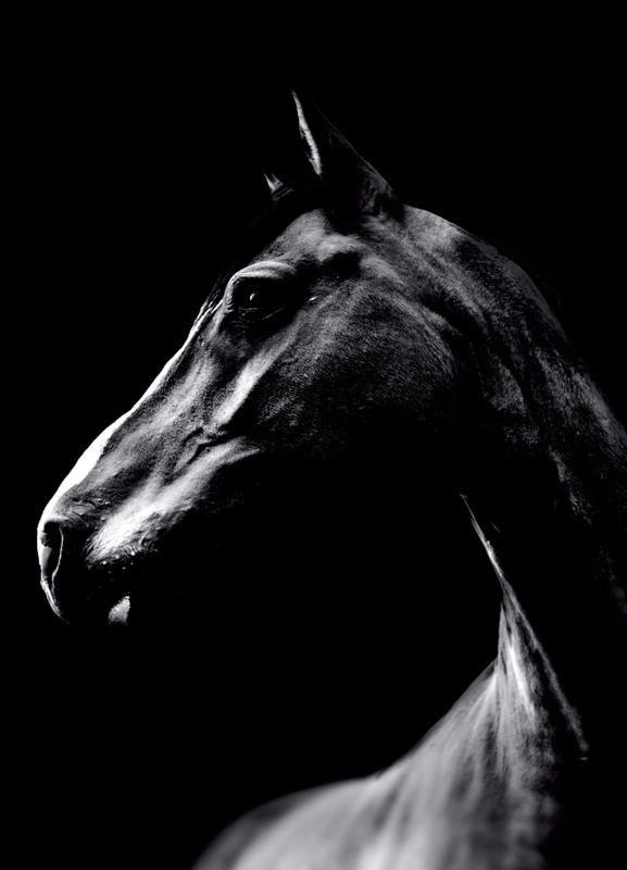 Photo of Dark Horse by Wouter Rikken | #Animals #Black #White #Pets #FarmAnimals