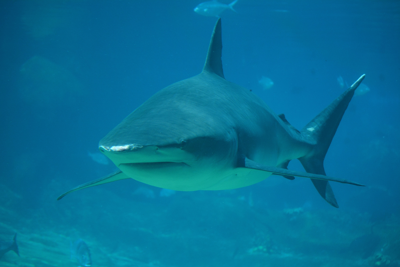 Big cock movie shark