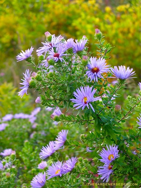 Category Plants For Light Effects Plants Foliage Flowers