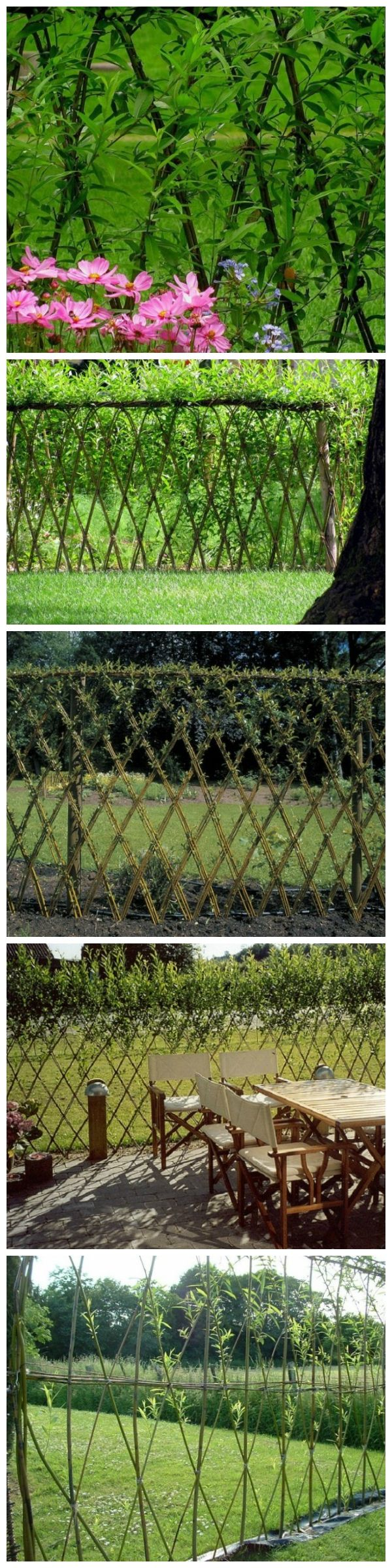 Amazing Examples Of Living Willow Fences Outdoors Pinterest